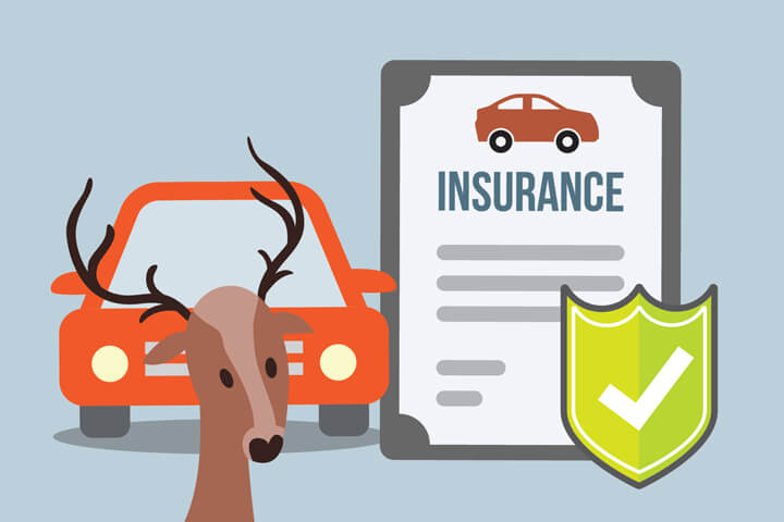Car insurance policy and car with deer in front concept for insurance coverage for impact with a deer or other animal